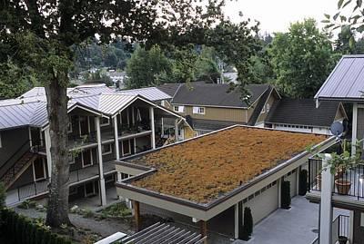 Sedum Roof, Mid-august Poster by Alan Sirulnikoff