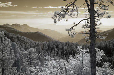 Sequoia View Poster