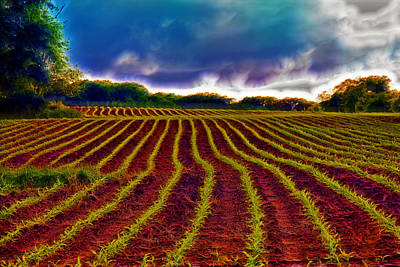 Shagadelic Crop Lines Poster by Bill Tiepelman