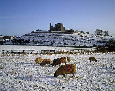 Sheep On A Snow Covered Landscape In Poster by The Irish Image Collection