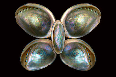 Shell - Conchology - Devine Pearlescence Poster by Mike Savad