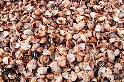 Shells Carpet I Poster