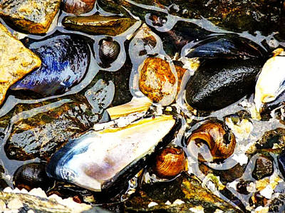 Poster featuring the photograph Shells by Kelly Reber