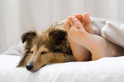 Sheltie Sleeping With Her Owner Poster
