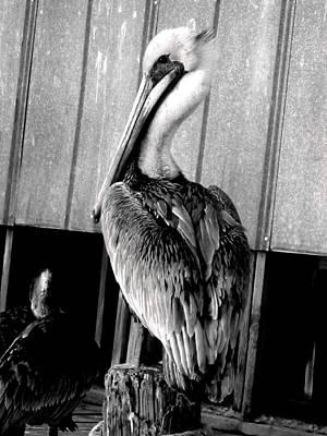 Shem Creek Pelican Poster