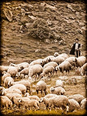 Guzelyurt, Turkey - Shepherd Poster