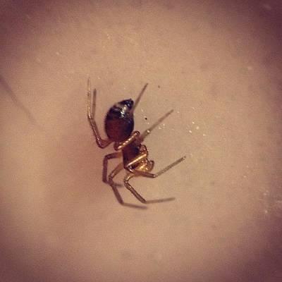 #shiny #golden #tiny #spider #macro Poster