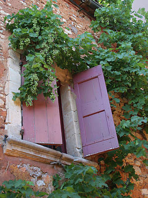 Shutters And Grapevines Poster by Sandra Anderson