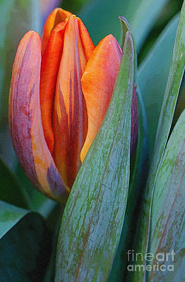 Shy Tulip Poster by Gerda Grice