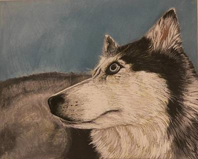 Poster featuring the drawing Siberian Husky by Robert Decker