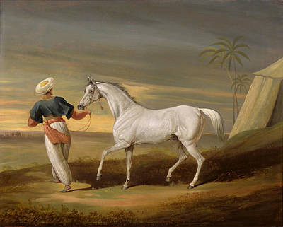 Signal - A Grey Arab With A Groom In The Desert Poster by David of York Dalby