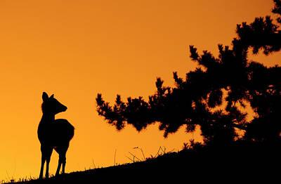 Silhouette Deer Poster by Onejoshuatree