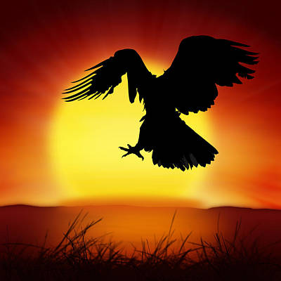 Silhouette Of Eagle Poster