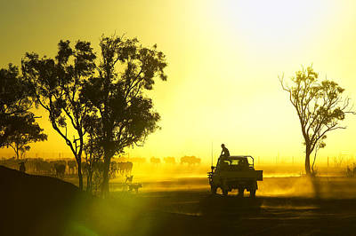 Silhouetted Cattle Muster At Sunset, Armraynald Station Poster