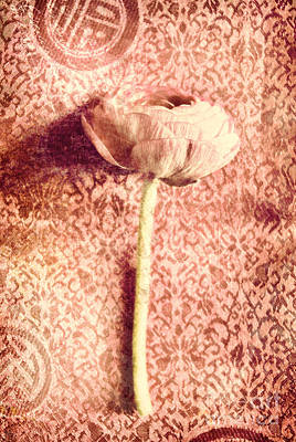 Single Blossom Poster