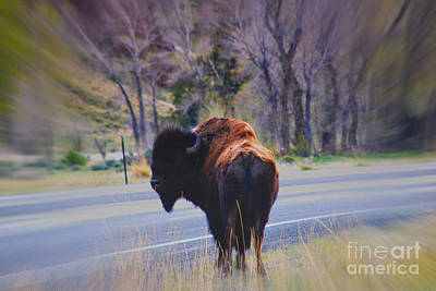Single Buffalo In Yellowstone Np Poster by Susanne Van Hulst