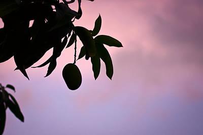 Single Mango On A Tree At Twilight Poster