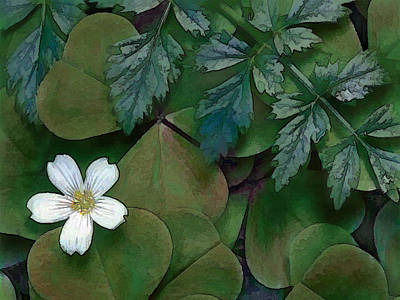 Single White Flower With Green Leaves Poster by Elaine Plesser