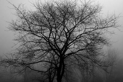 Skeletons In The Fog Poster