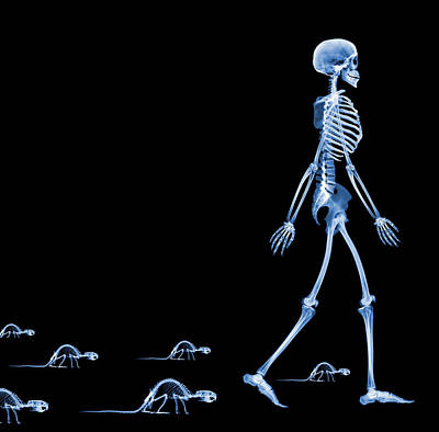 Skeletons Of A Human And Rats, X-ray Poster
