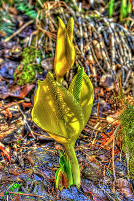 Skunk Cabbage - 2 Poster by Rod Wiens