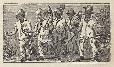 Slaves Often Travel In �coffles,� Poster