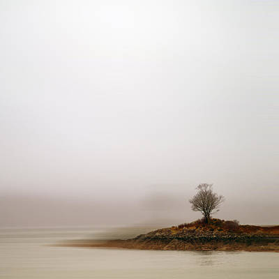 Small Island With Lone Tree Poster by Andrew Lockie