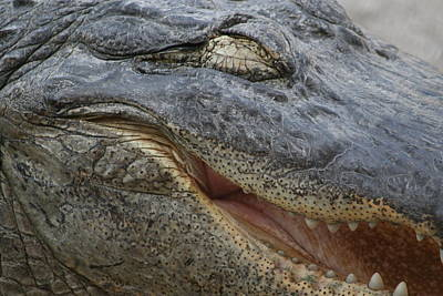 Smiley Aligator Poster by Valia Bradshaw
