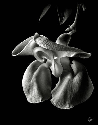 Snail Flower In Black And White Poster