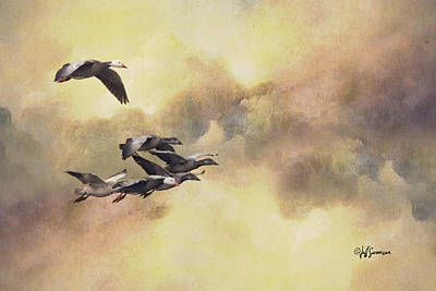 Snow Geese In Flight Poster by Jeff Swanson
