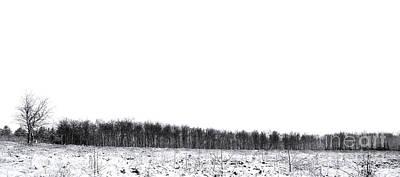 Snow Tree Line Panorama Poster