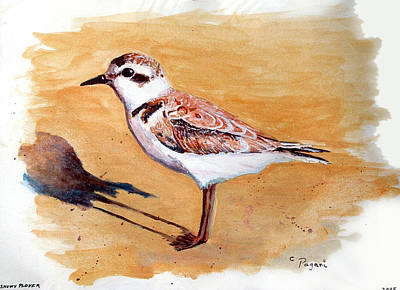 Poster featuring the painting Snowy Plover by Chriss Pagani