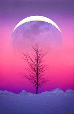 Snowy Tree Poster by Larry Landolfi