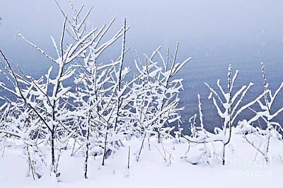 Snowy Trees Poster by Elena Elisseeva