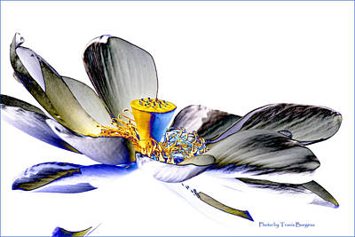 Solarized Lotus C Poster by Travis Burgess