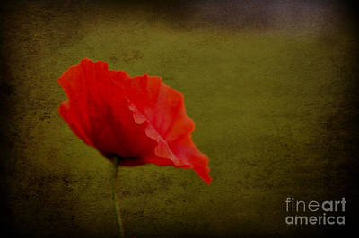 Poster featuring the photograph Solitary Poppy. by Clare Bambers