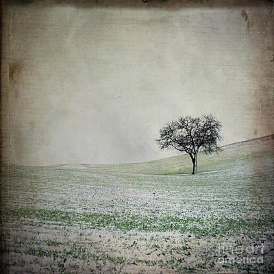 Solitary Tree In Winter. Auvergne. France. Europe Poster by Bernard Jaubert