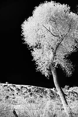 Solo Tree In Sedona Poster