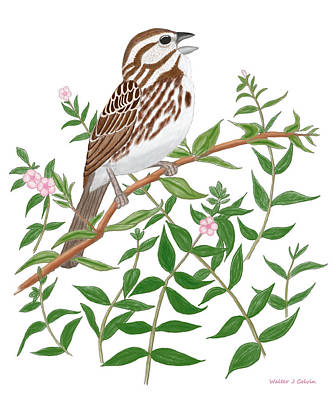 Poster featuring the digital art Song Sparrow by Walter Colvin
