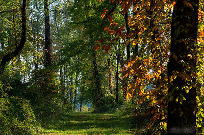 Southern Indiana Fall Colors Poster