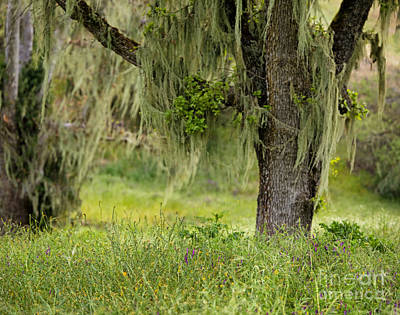 Spanish Moss And Wildflowers Poster
