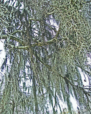Poster featuring the photograph Spanish Moss by Lizi Beard-Ward