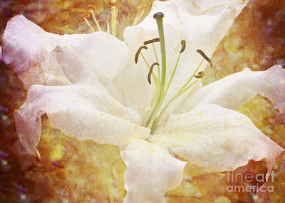 Sparkling Lily Poster by Clare Bambers