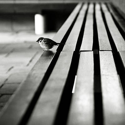 Sparrow On Bench Poster