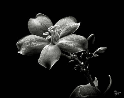 Spicy Jatropha In Black And White Poster