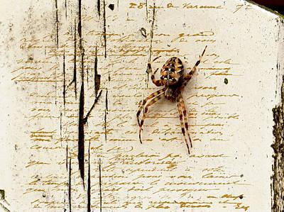 Spider Letter Poster