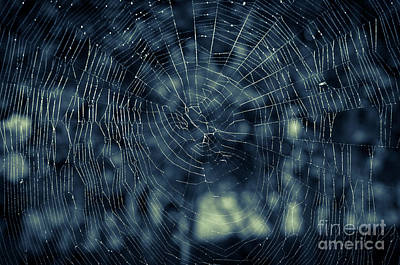 Poster featuring the photograph Spider Web by Matt Malloy