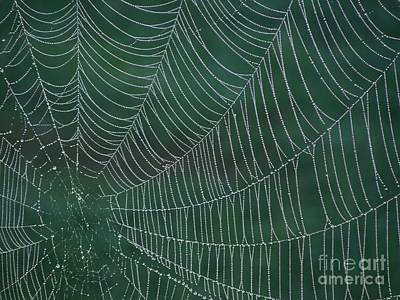 Spider Web With Dew Drops Poster by Chad and Stacey Hall