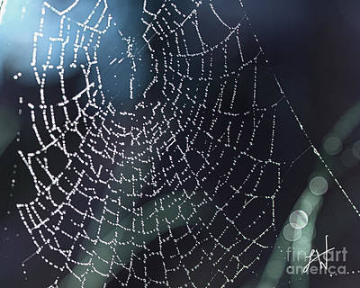 Poster featuring the photograph Spiderweb Blues by Artist and Photographer Laura Wrede