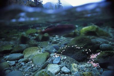 Split Level View Of Underwater Poster by Joel Sartore